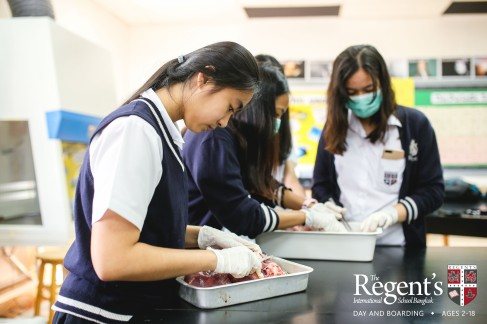 Dissection with logo-34